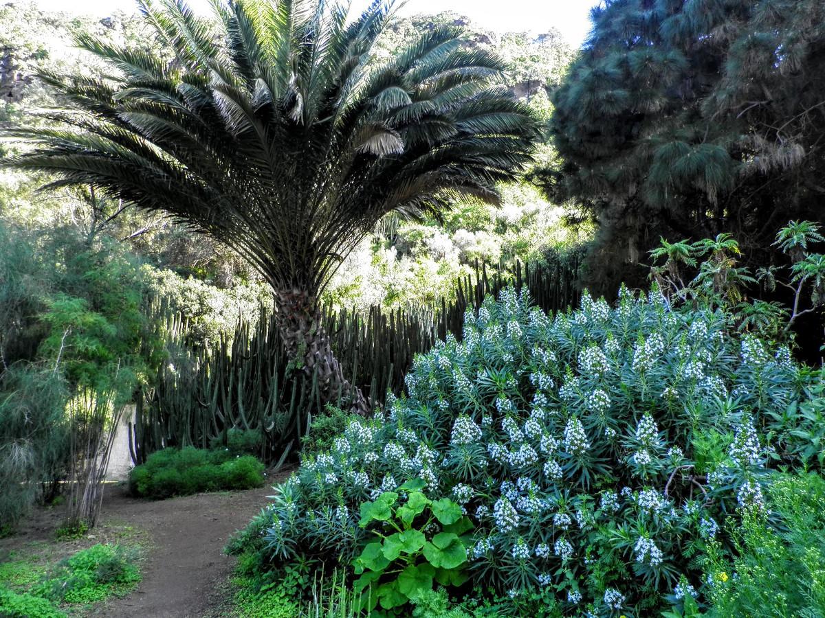 Viera-y-Clavijo-botanikus-kert-5-kihagyhatatlan-látnivaló-Gran-Canaria-Kanári-szigetek-Viasale-travel
