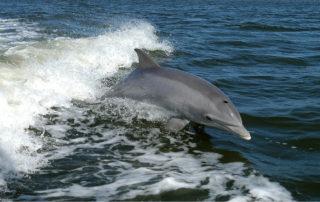 Bálnák és delfinek a Kanári-szigeteken