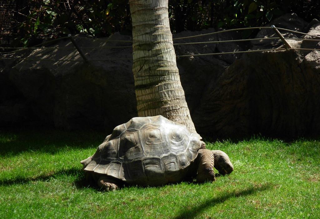 világ-legjobb-állat-növénykertje-loro-park-6