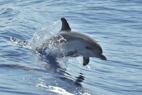 Delfin-bálnales-katamaránnal