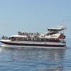 Tenerife-Hajókirándulás-bálnales-üvegfenekű-hajóval-1