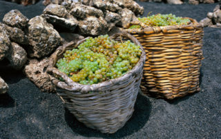 bor-borászat-bodega-kanári-szigetek-2