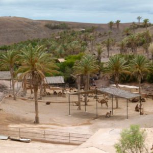 oasis-park-fuerteventura