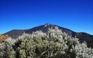 Ide-el-kell-hogy-menjen-Teide-Nemzeti-Park-4