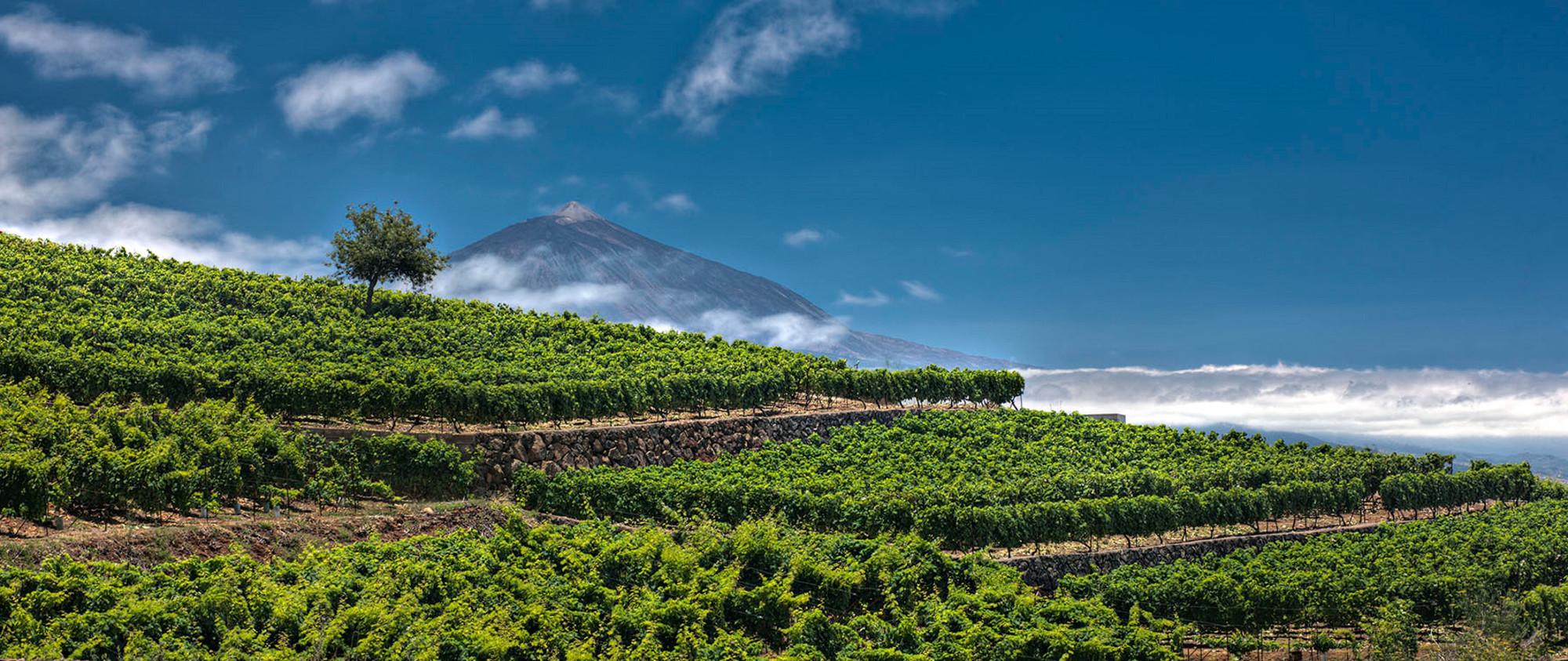 Kanári-szigetek-apró-csodái-Tenerife-titkai
