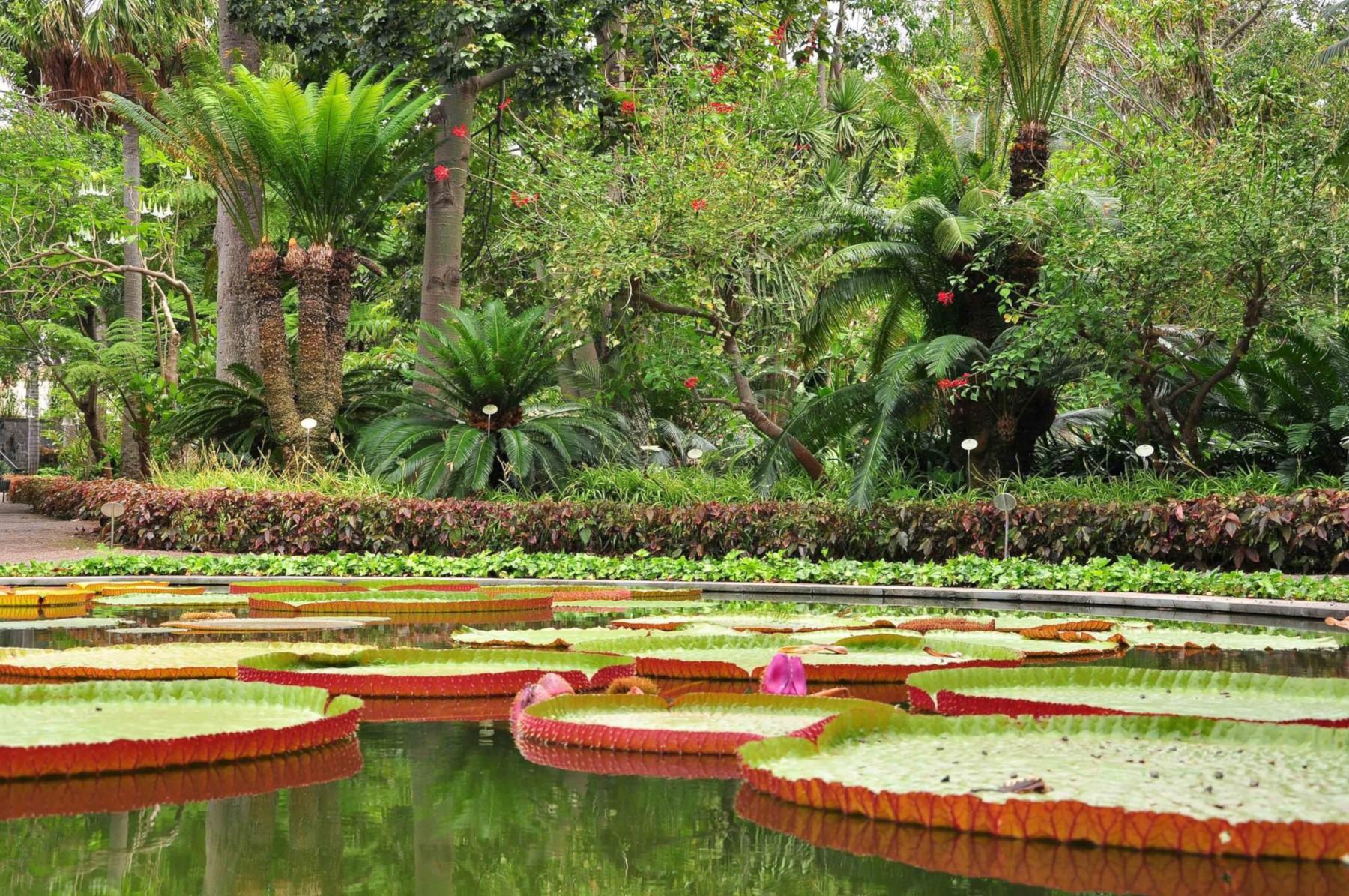 14-Egzotikus-kertek