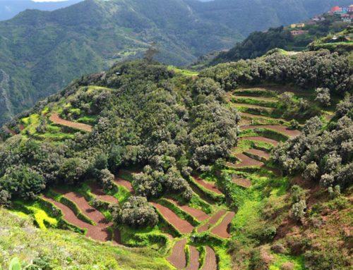 Tenerife az én szememmel – Erre érdemes figyelnie! Tippek, 2. rész