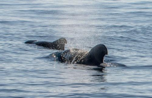 Gran-Canaria-Hajokirandulas-delfinles-uvegfeneku-hajoval