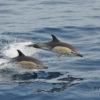 Bálna-és-delfinles-katamaránnal-Grabn-Canaria